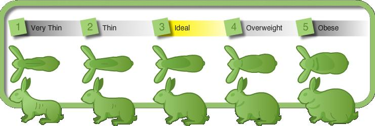 What Is A Dewlap